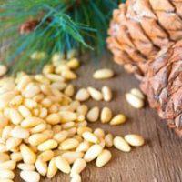 Кедровые орехи при диабете