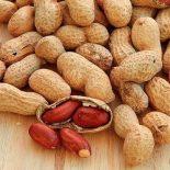 Можно ли есть арахис при сахарном диабете