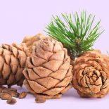 Можно ли кедровые орехи при диабете